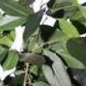 12 Plantas de casa que o ar limpo