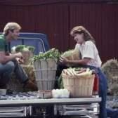 1979 Ficha do caminhão de chevy