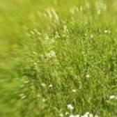 Adaptações de grama