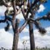 Adaptações da planta da mandioca
