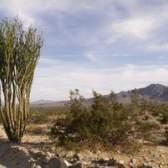 Adaptações que permitem que as plantas para reduzir a perda de água