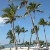 Resorts de praia perto de tampa bay