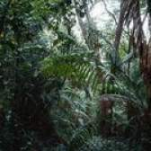 Breve descrição de uma floresta tropical
