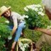 Assassino grama que não irá prejudicar plantas