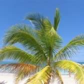 Cruzeiros para jamaica a partir de florida