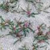 Diferentes tipos de musgo florescimento
