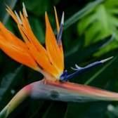 Diferentes tipos de flores na nigéria