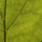 As plantas crescem mais lento à noite?