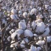 Tecido de algodão vs. Estofos de poliéster