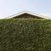 Zona 5 sombrear a área e tela de privacidade arbustos verdes