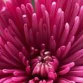 Plantas com flores que não atraem abelhas