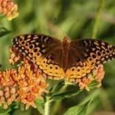 Flores que atraem borboletas