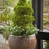 Arbustos verdes em miniatura