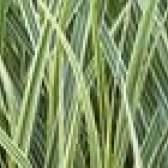 As melhores plantas perenes para a zona 7