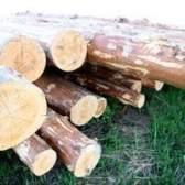 Como cortar o seu próprio piso de madeira de árvores