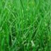 Quando aplicar fertilizantes scotts para um gramado?