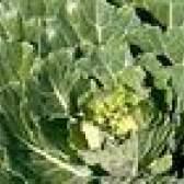 Como cuidar de bonecas Cabbage Patch cabelo Cornsilk