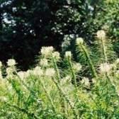 Como limpar as ervas daninhas overgrown