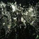 Como controlar aranhas