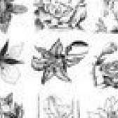 Como desenhar diferentes tipos de flores