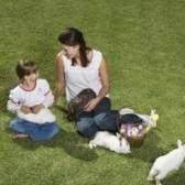 Como alimentar um coelho selvagem bebê