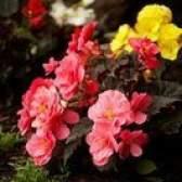 Como aumentar a floração em plantas