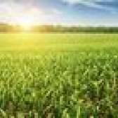 Como investir em terras agrícolas