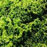 Como suco de nabo cru greens