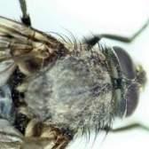 Como manter as moscas fora de restaurantes