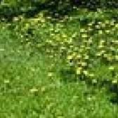Como matar as ervas daninhas sem matar plantas