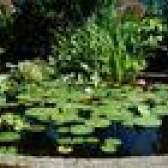 Como fazer uma lagoa acima do solo pré-formado