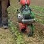 Como remover grama após cultivar um jardim