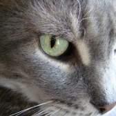 Como redefinir os cartuchos dos génios do gato
