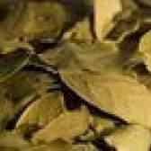 Como aparar uma árvore de folha de louro