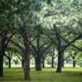 Como usar fita adesiva para árvores de pele