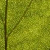 Condições ideais para a fotossíntese