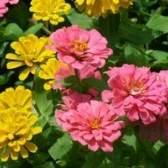 Flores para um ambiente quente sol