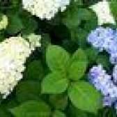 Lista de flores do casamento para a queda