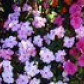 Flores para áreas sombreadas