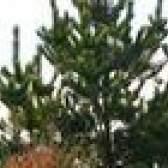 Miracle-gro em árvores