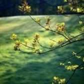 Leis de remoção de árvore de carvalho na califórnia