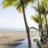 Adaptações da palmeira