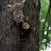 Armas de pellets para dissuadir os esquilos