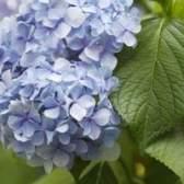 As melhores flores para plantar em west virginia