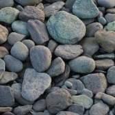 As plantas que crescem e vivem na rocha