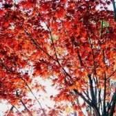 Plantas e árvores que crescem no estado de delaware