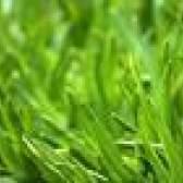 Devo cortar a grama após a aplicação de herbicida?
