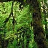 Características especiais para biomas de floresta tropical