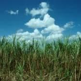 Requisitos de cana de fertilizantes