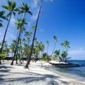 Variedades altas e finas de palmeiras